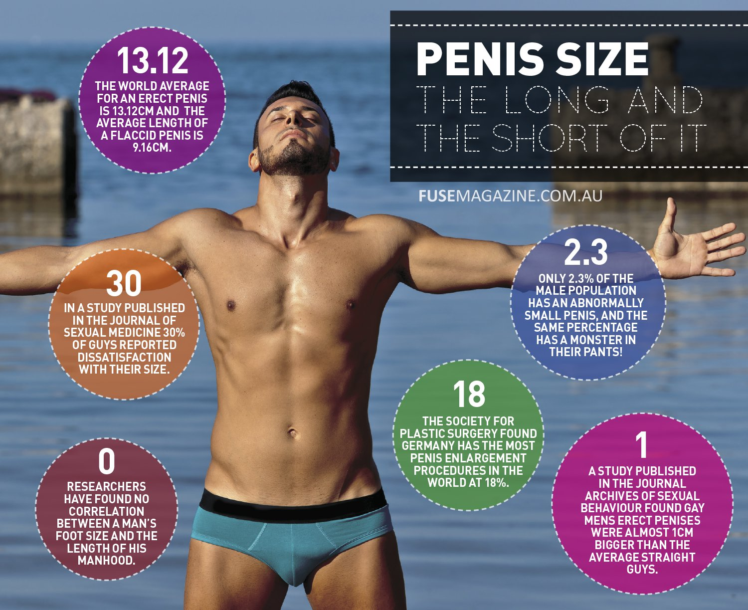 Average male peni size