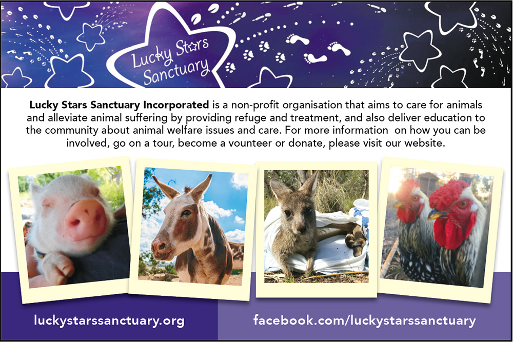 Lucky Stars Animal Sanctuary Canberra