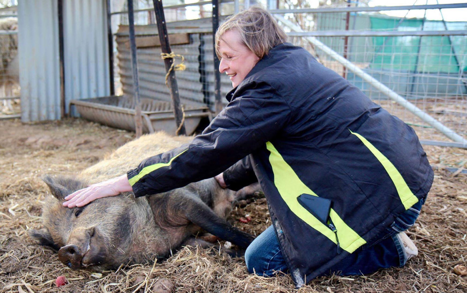 Saving Pigs at Lucky Stars Sanctuary